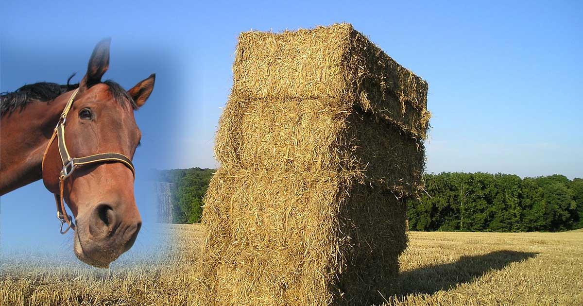 Pferde-Stall: Was sollte man eher verwenden, Spähne oder Stroh?