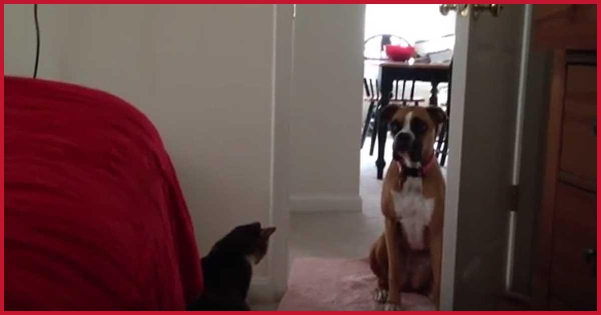 Dieser Hund wird offensichtlich nicht der beste Freund der Katze!