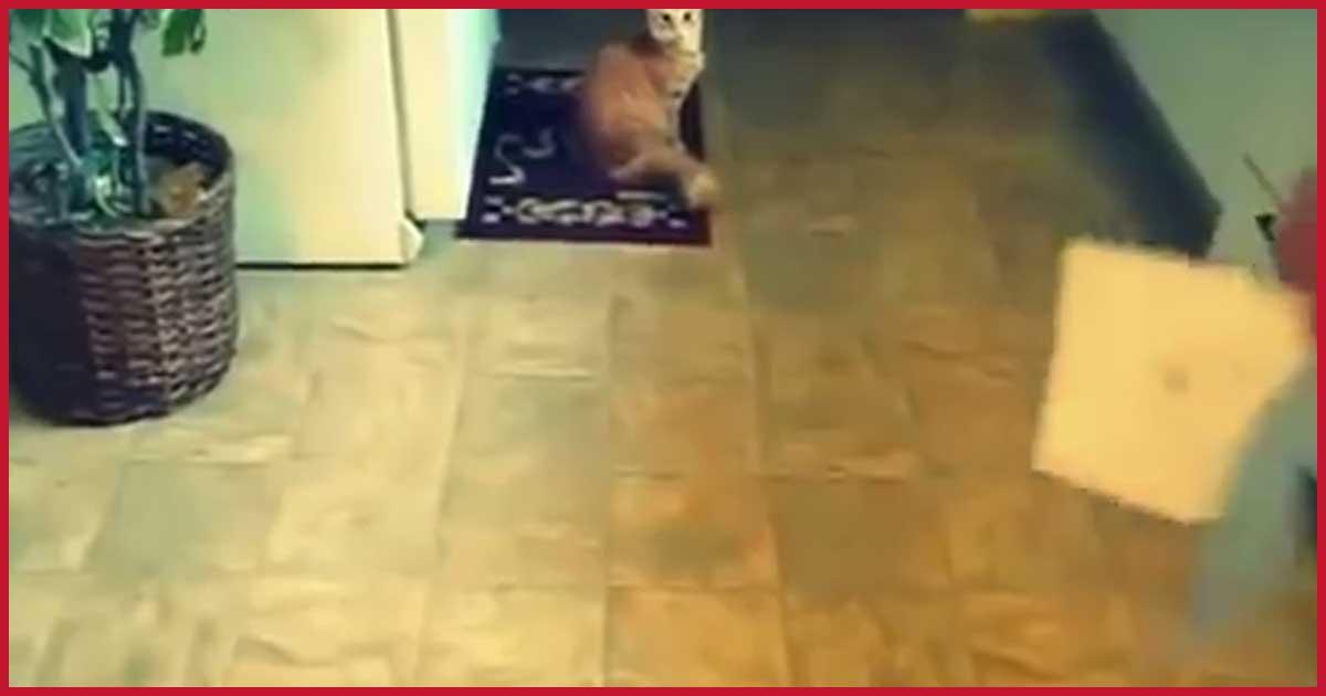 Du schenkst einer Katze eine Karte zum Geburtstag. Was dann passiert du glaubst es nicht!