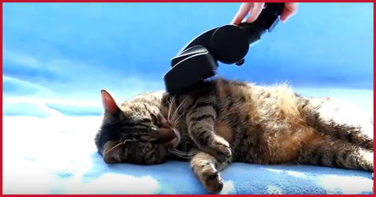 Katze mit Staubsauger reinigen.