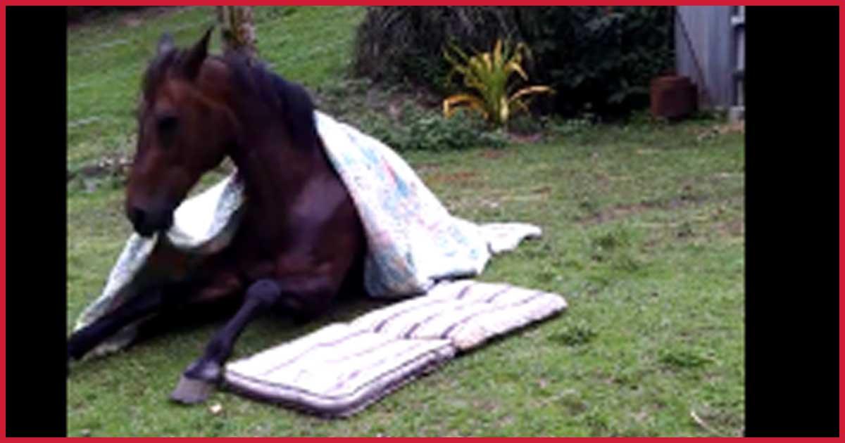 Dieses Pferd deckt sich selber zu wenn es schlafen geht.