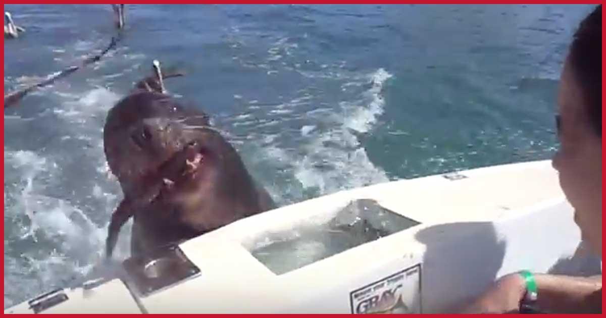 Was ist denn mit dem Seelöwen los?