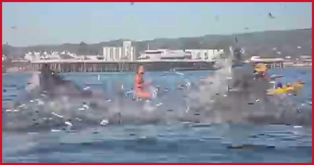 Surferin nahezu von Wal verschluckt!