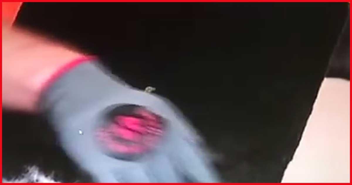 Verblüffend. Wie sich einfach Tierhaare aus dem Auto entfernen lassen. Sieh selbst.