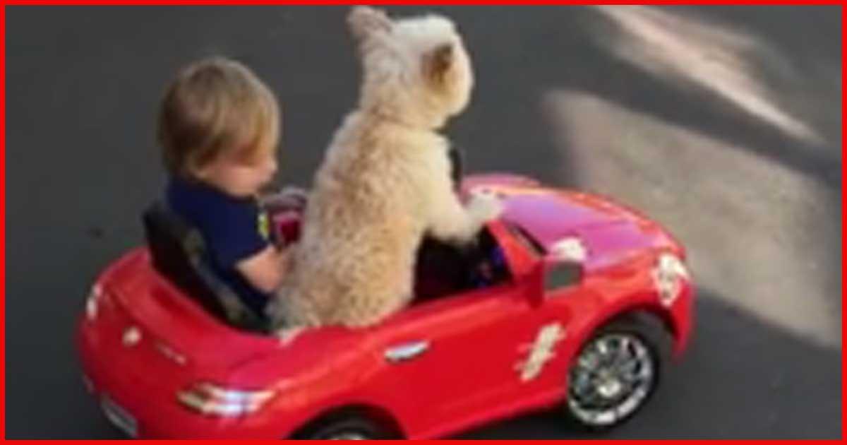 Was dieser Hund mit dem 1-jährigen Jungen macht, bringt das ganze Internet zum Lachen.
