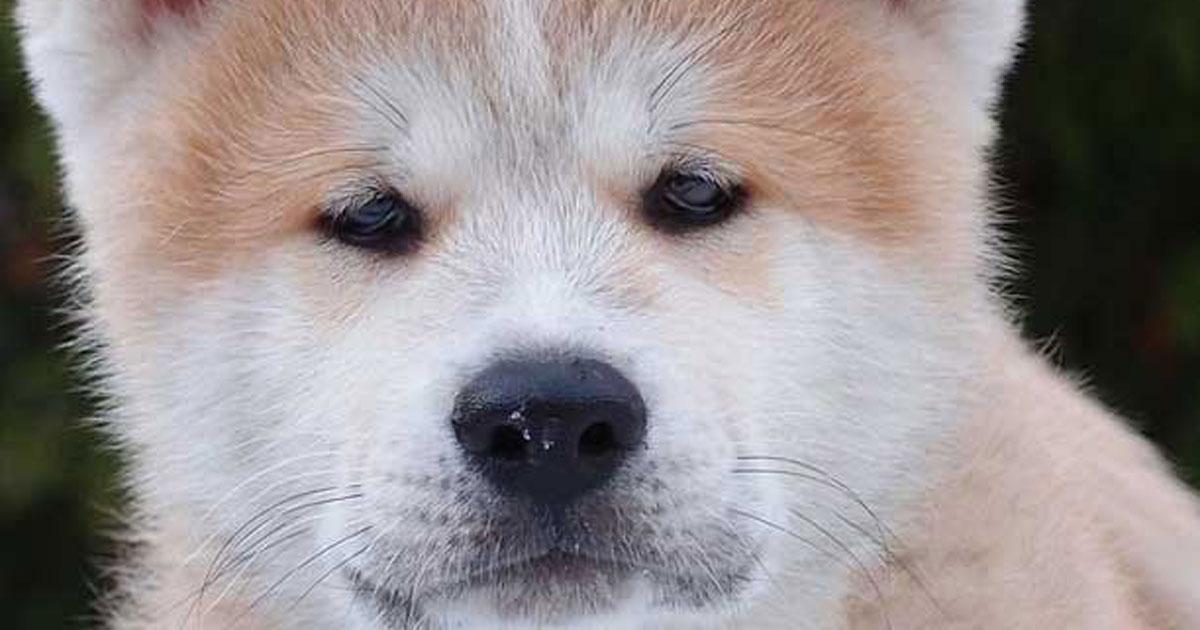 Dieser Hundeblick ...