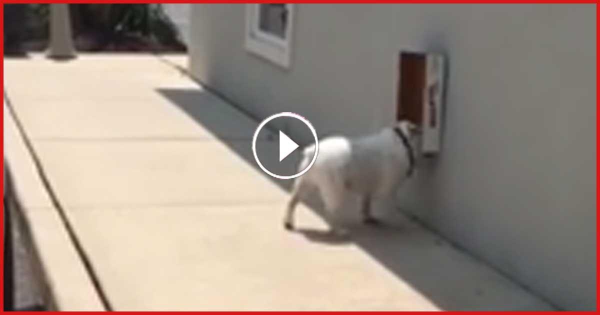 Diese Bulldogge haben 1,2 Millionen schon bewundert. Was sie macht, schau dir jetzt an!