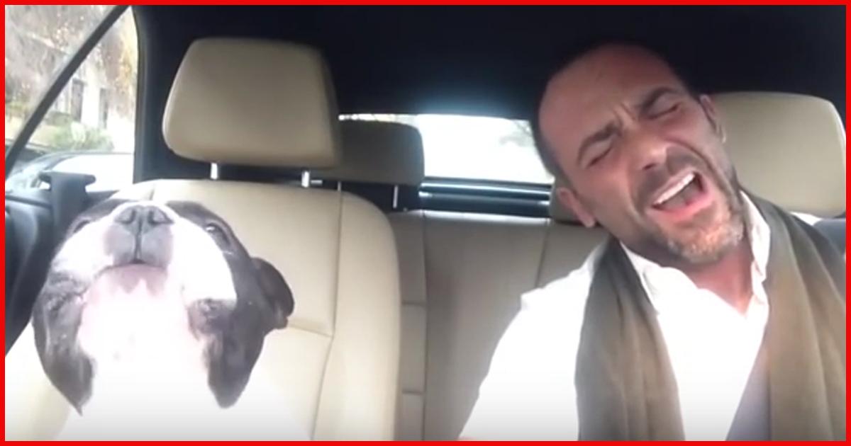 Hund trällert zu Rihanna-Song! Sieh dir das an!