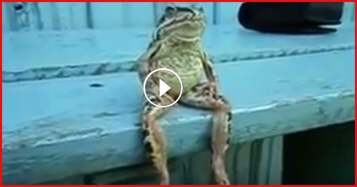 Dieser Frosch ist der coolste Frosch der Welt! Er ist der Boss.