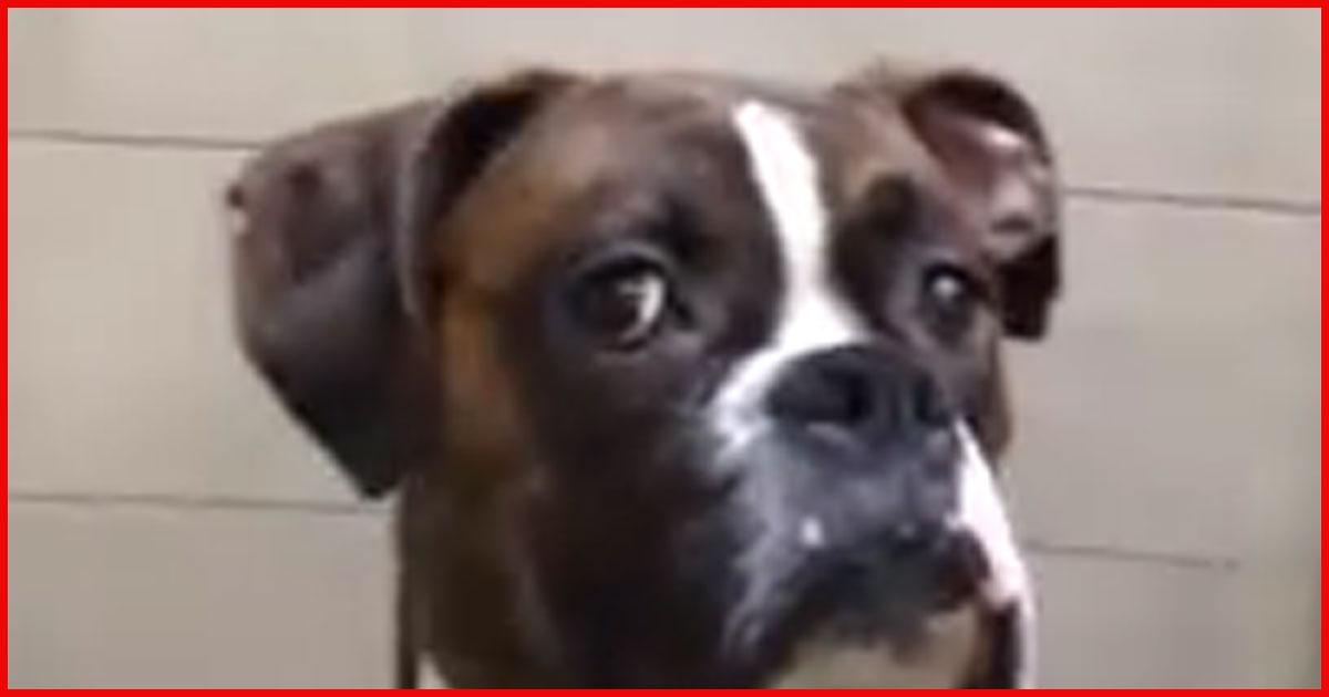 Dieser Hund lässt Dich nicht aus den Augen! Selber schuld!