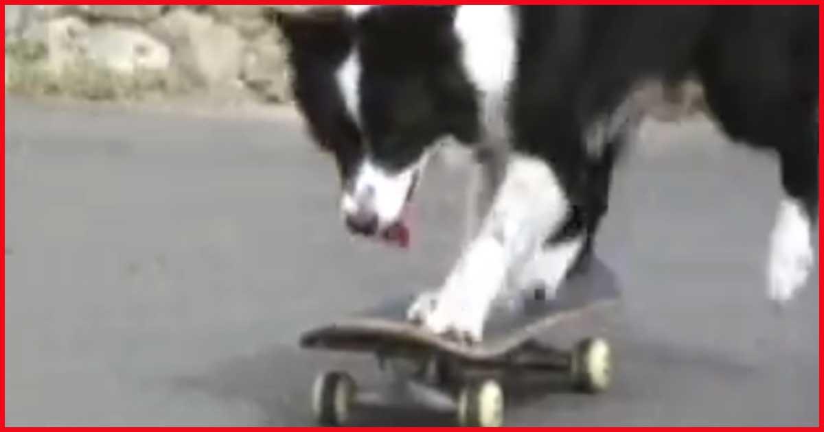 Dieser Hund fährt tatsächlich Skateboard. Unfassbar, sieh´ dir das an!