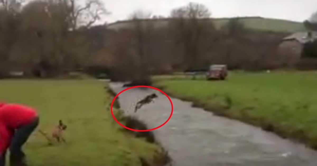 Unglaublich was für ein Sprung über den Fluss! Sie dir DAS an!