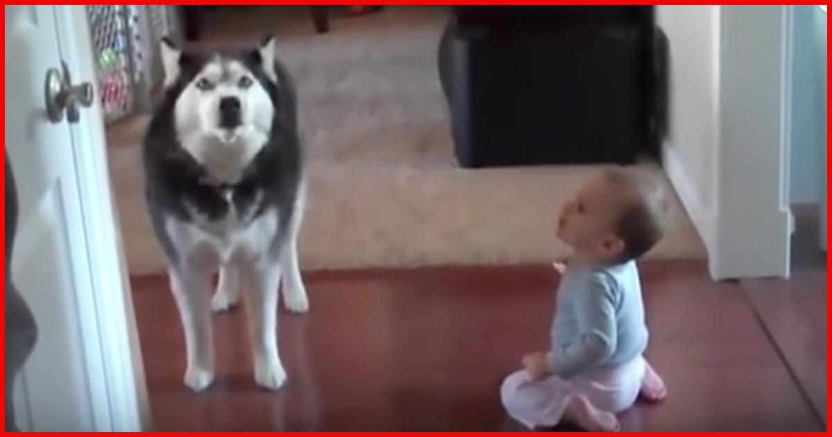 Husky und Baby klönen miteinander! Einfach niedlich.