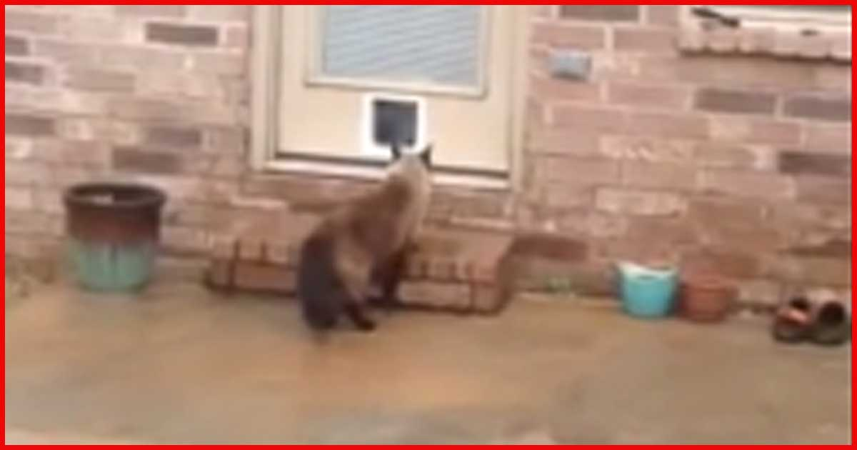 Da baut er eine Katzenklapppe in die Tür ein und die Katze macht DAS!