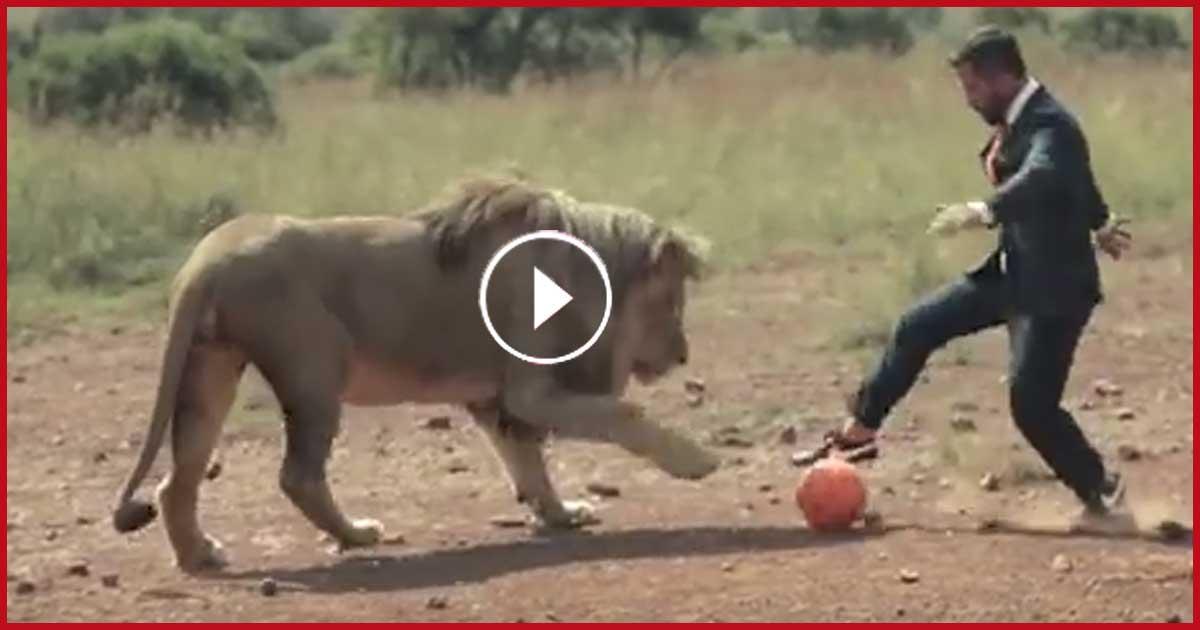 LEBENSEGEÄHRLICH! Mann spielt mit wilden Löwen Fussball!