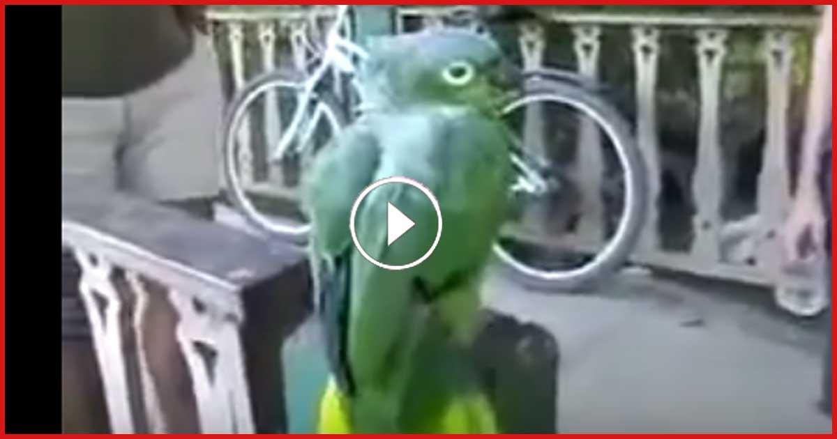 Dieser Papagei verarscht Touristen! Sieh dir das an.