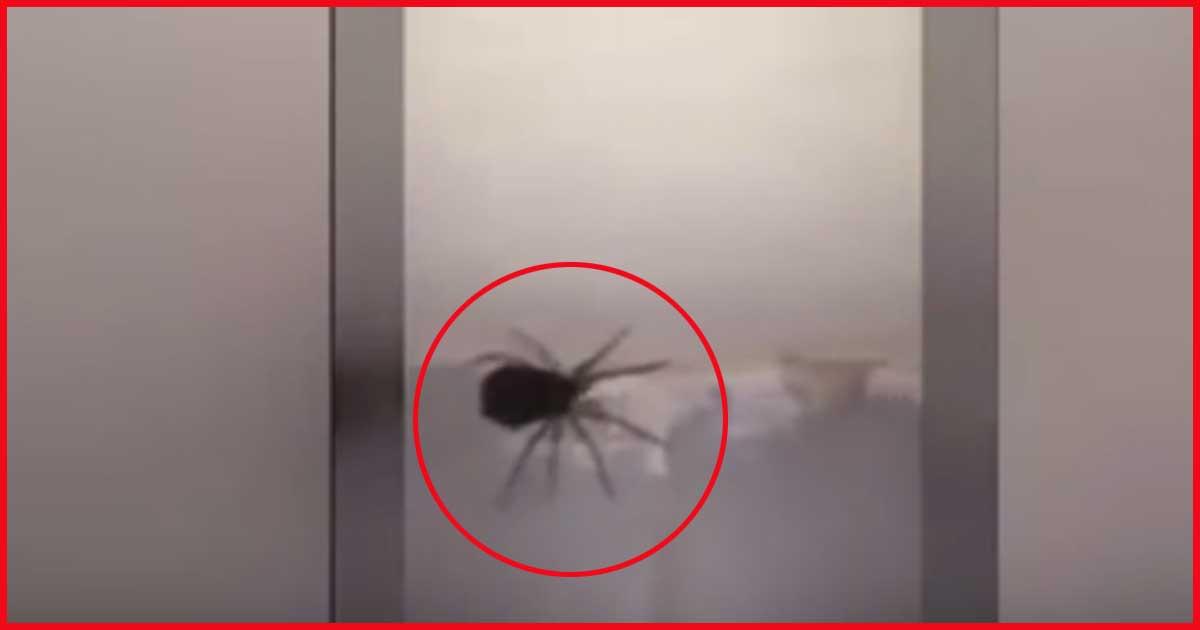 Der blanke Horror. Spinne explodiert. Sieh dir das an.