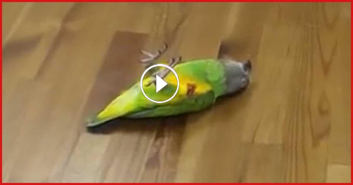 MÖRDER! Mann erschoß seinen Papagei!