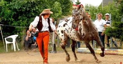 Wie gut kennst du dich im Natural Horsemanship aus?