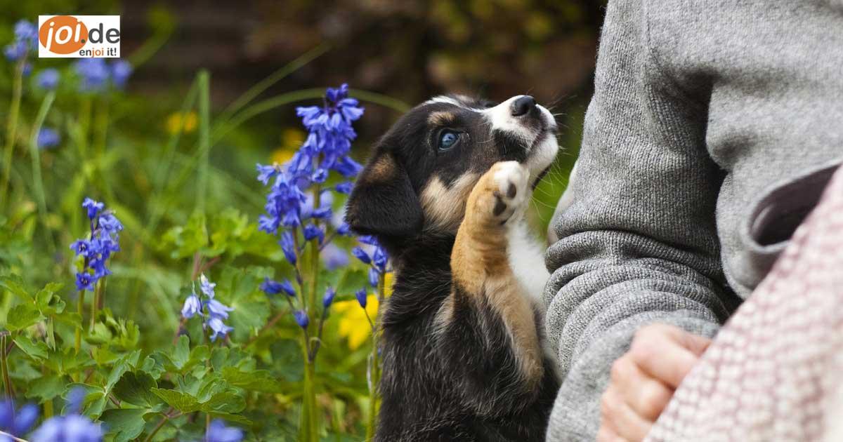 """""""Will ich sofort!"""", habe ich gedacht. Und wie geht es Dir? Die 11 niedlichen Hunde-Welpen"""