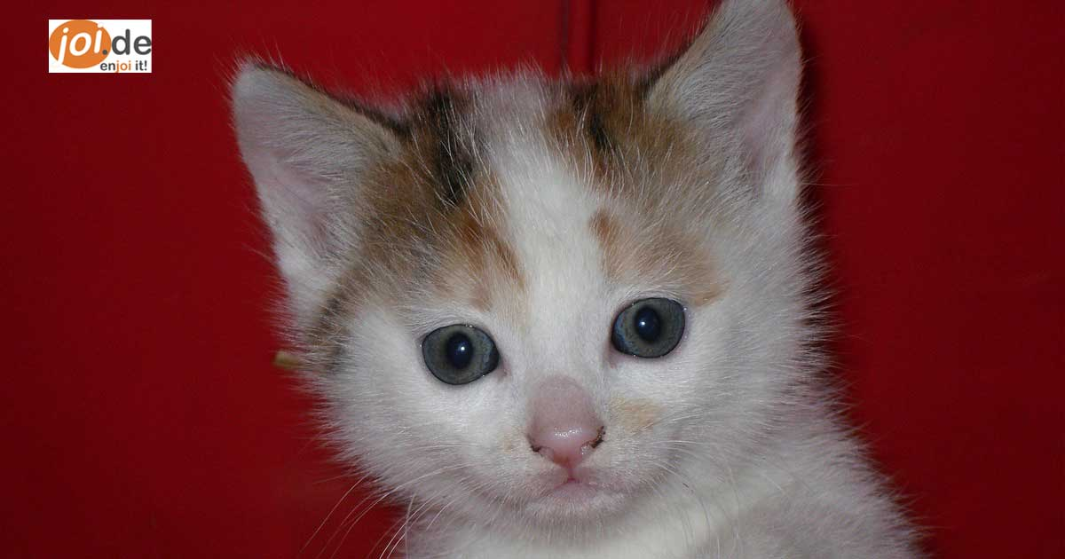 Die sind so niedlich. Ich war beim Anschauen so gerührt - die 10 niedlichen Katzenbilder.