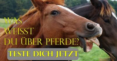 Was weißt du über Pferde?