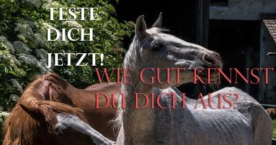 Quiz rund um das Thema Pferde! Für Pferdeliebhaber mit Grundwissen! Folge 4